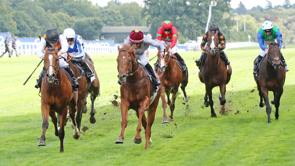 Court Of Justice (by Dabirsim) could hardly have shaped better when when second at Ascot in September.