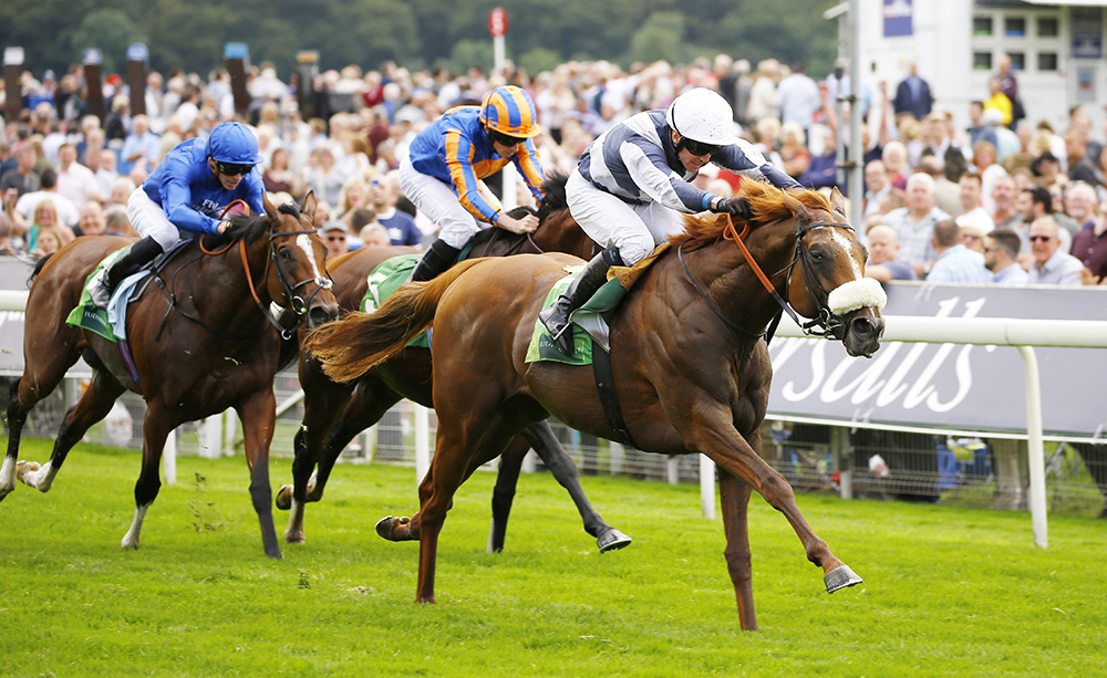 Ulysses defeats multiple Group 1 winners Churchill and Barney Roy in the Group 1 Juddmonte International