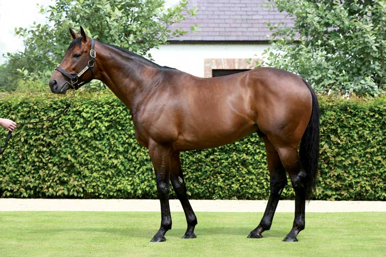 Sea The Stars, whose pinhooked foals made an average of £114k after costs at the yearling sales.