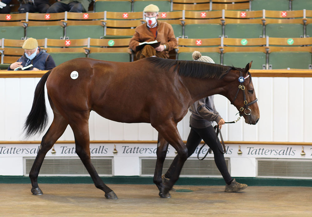 The Sea The Moon colt, offered by Kilminfoyle House Stud as agent at Tattersalls Book 2, saw his foal price of €42,000 appreciate to 200,000gns when reselling to Stroud Coleman Bloodstock.