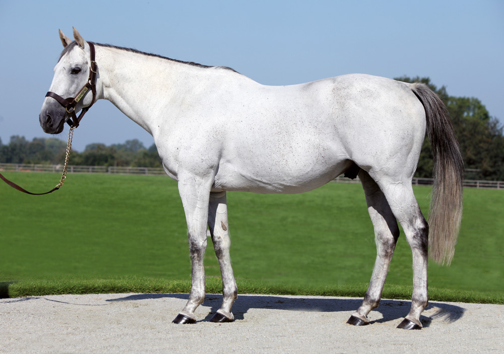 Haras de Colleville's Kendargent, who also recorded a healthy average uplift figure of 16.1.