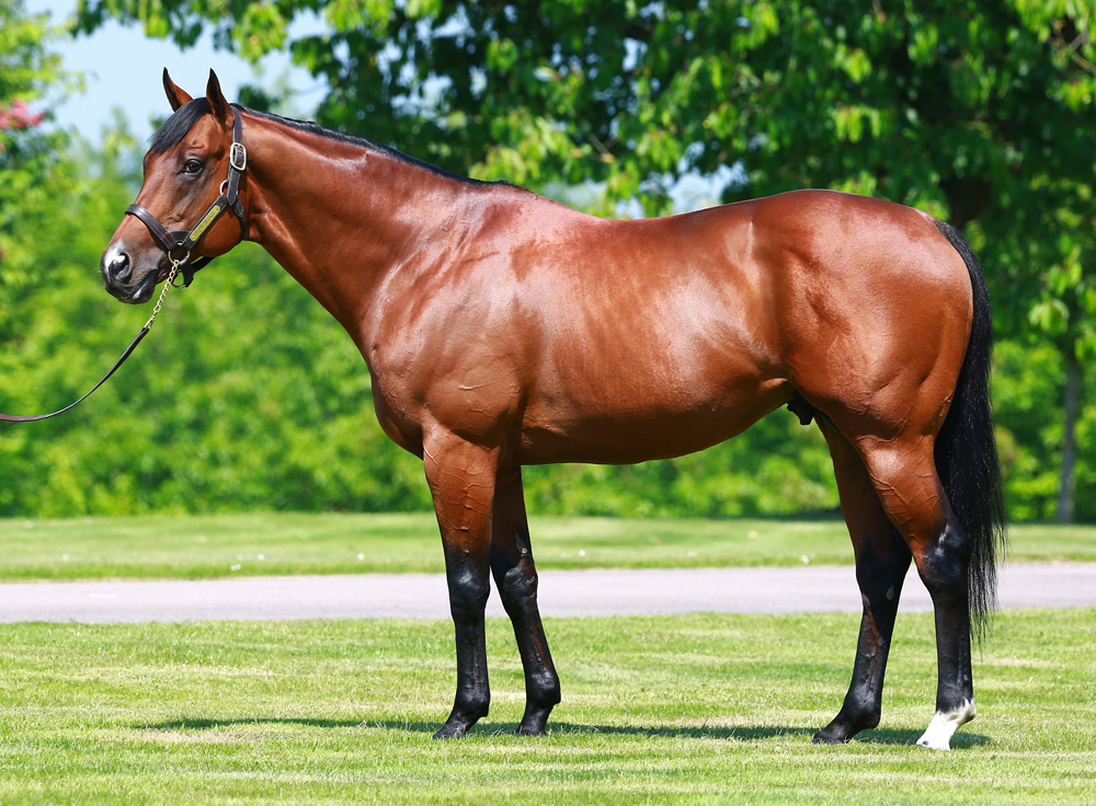 Haras de Bonneval's Siyouni. Both he and his sire, Pivotal figure prominently in the uplift table.