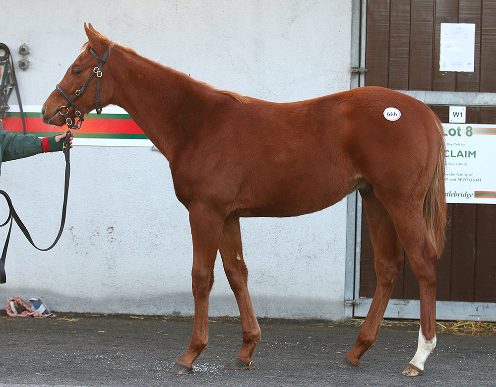 This stunning colt by Ulysses ex Fools In Love was sold by the Castlebridge Consignment to Jamie Railton for €175,000 at last year's Goffs November Foal Sale