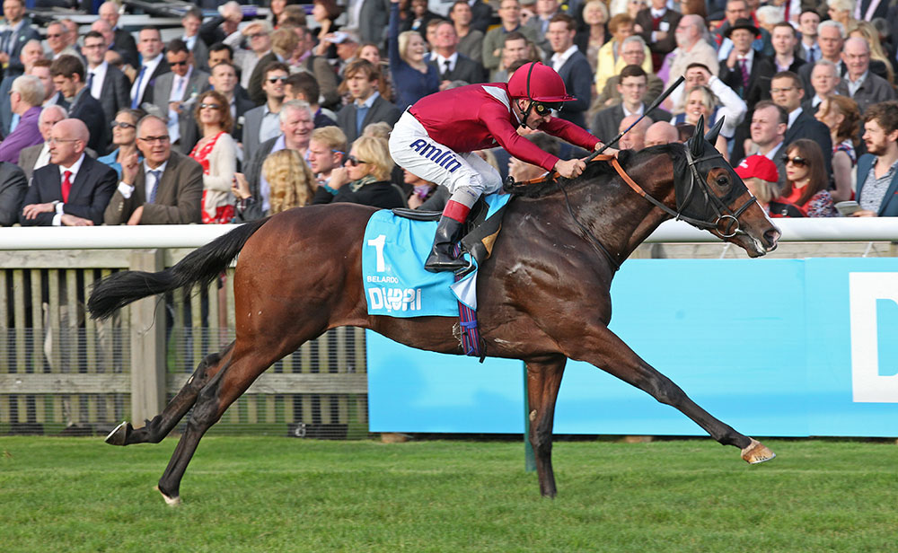 Belardo secures his status as Champion Two-Year-Old by winning the Group 1 Dewhurst Stakes from Kodi Bear.