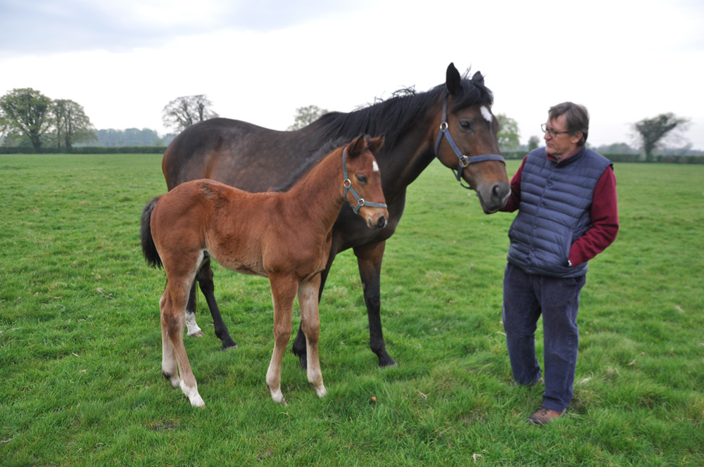 Already the dam of two multiple winners, Bank On Black is pictured here with her 2019 filly foal by Bungle Inthejungle.