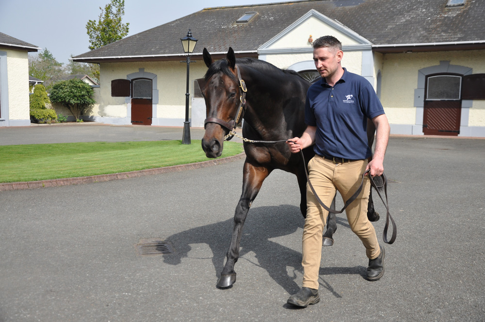 The well-supported Awtaad glides around Derrinstown's stallion yard, led by Cormac McEvoy.