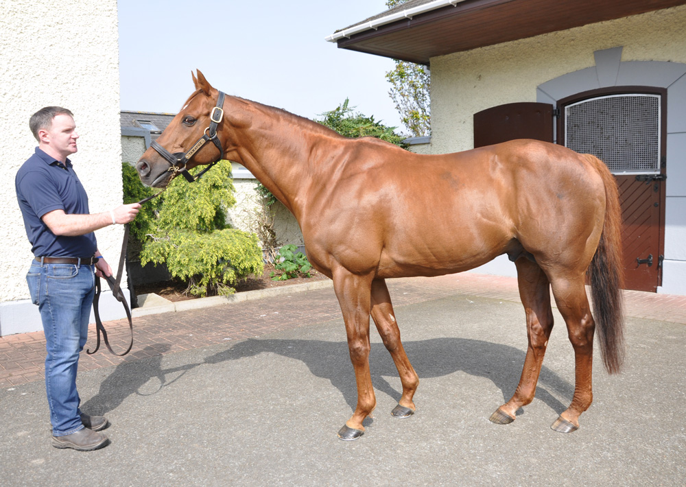 The quality of Tamayuz's books has been going up, as the stud can be selective about his mares.