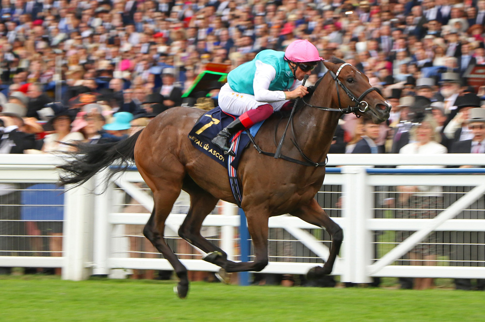 Kingman's son Calyx is a Group 1 winner in waiting.