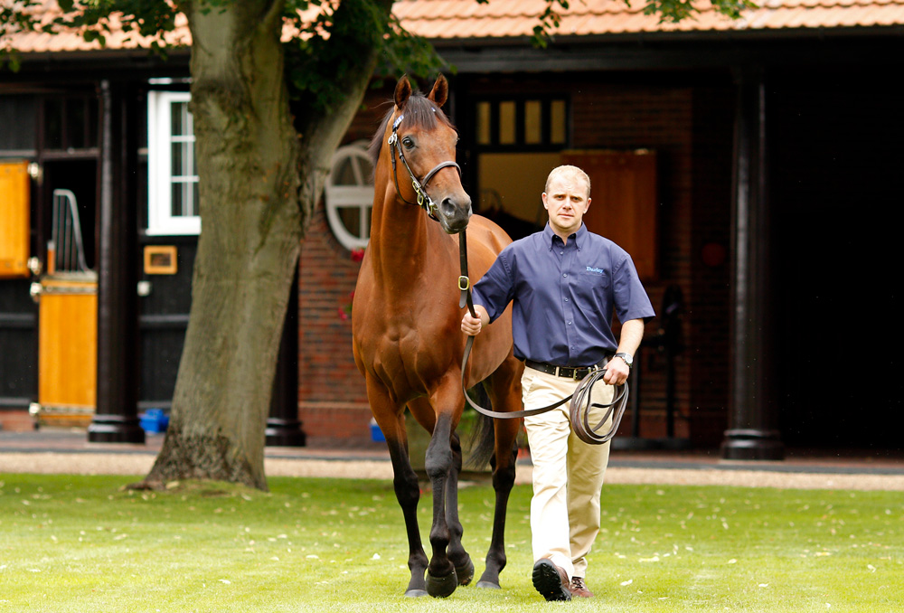 Postponed, who stands his second season at Dalham Hall Stud in 2019 at a fee of £15,000
