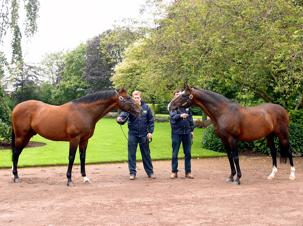 Danehill and Sadler's Wells at Coolmore Stud